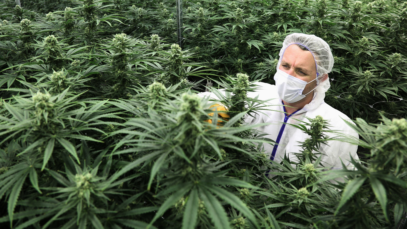 Medicinal Marijuana – 7 Advocates Saying It Ought To Be Legal